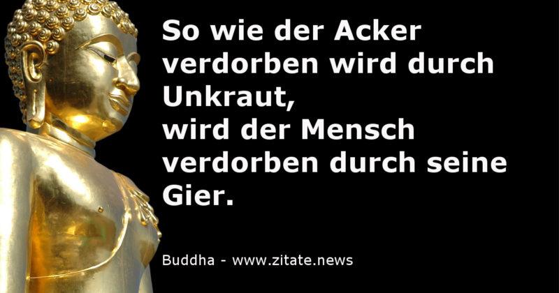 Gier Buddha